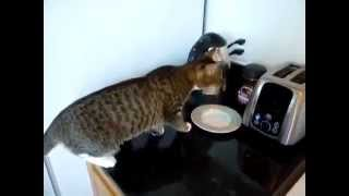 Cat vs Toaster Кошка против тостера Юмор! Прикол! Смех