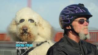 Лучшие друзья | Жизнь собак | Discovery Channel