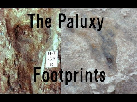 Do the Paluxy River Tracks prove Dinosaurs and Humans co-existed?