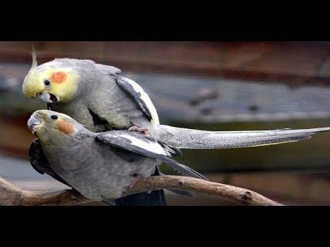 Сексуальная жизнь птиц