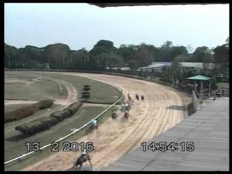 ม้าแข่งสนามโคราช วันเสาร์ที่ 13 กุมภาพันธ์ 2559