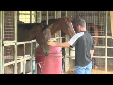 A Career In The Equine Industry (JTJS92014)