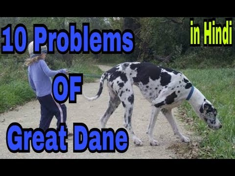 10 Problems OF Great Dane in hindi ||problems of dogs ||