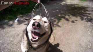 Funny Dogs Compilation - Scratching and Massager Dog