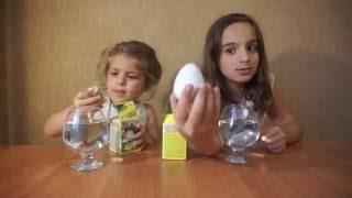 Выращиваем в воде динозавров . Яйца динозавров.Grow in water dinosaur. Dinosaur eggs.