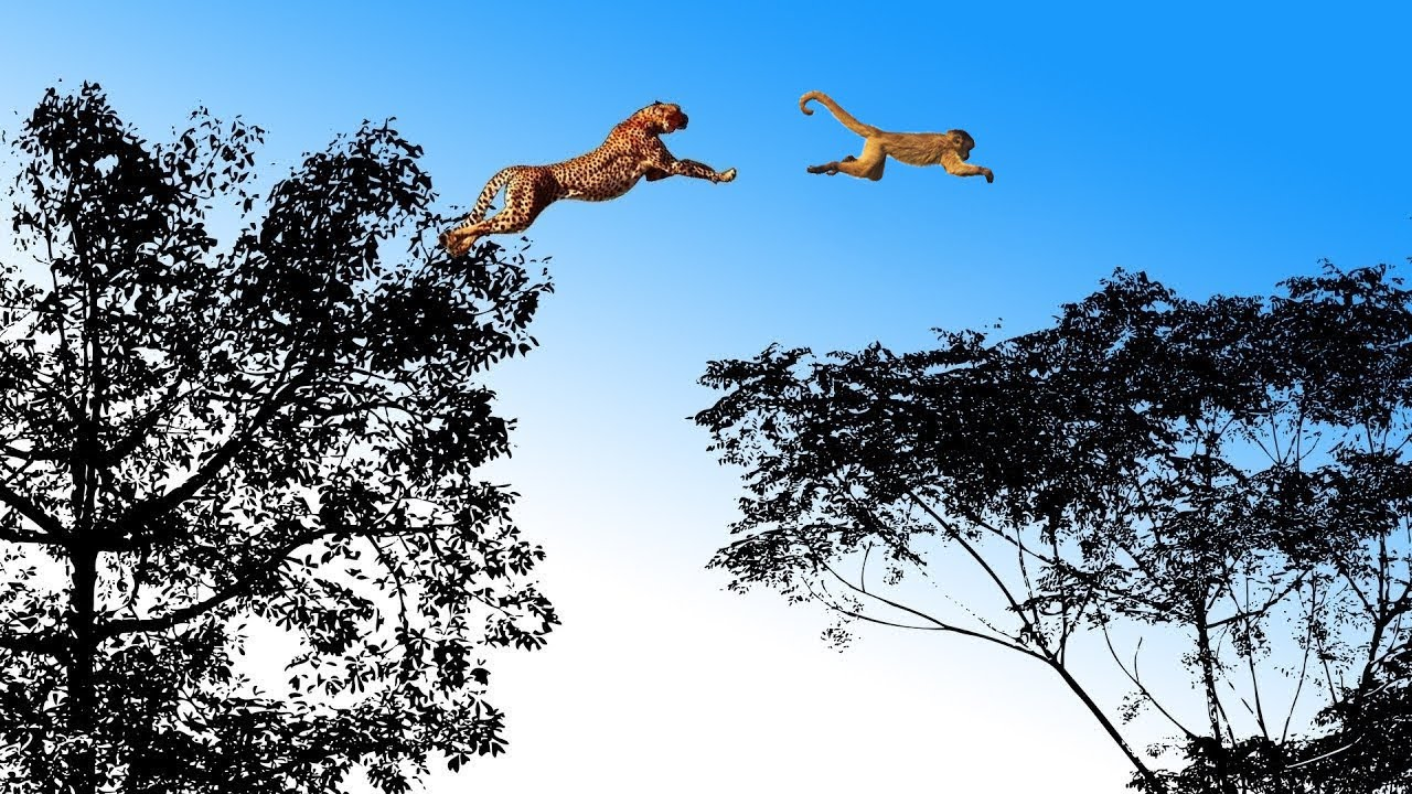 Download The LEOPARD, the most Agile and Deadly Big Cat  | Leopard vs Monkey, Warthog and other Animals