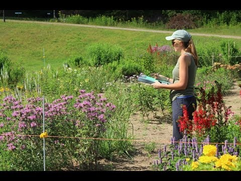 EcoBeneficial Interview: Annie White on Native Plant Cultivars, Native Plants & Pollinators