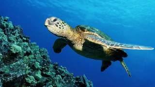 Всемирный день черепахи Черепаха — символ мудрости, богатства и долголетия