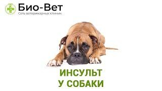 Инсульт У Собаки & Почему У Собаки Случился Инсульт. Ветклиника Био-Вет