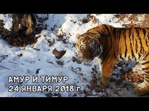 АМУР И ТИМУР 24 ЯНВАРЯ 2018 г.