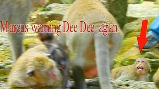 Marcus warning Dee Dee gain but Dee Dee run so fast / Monkey Post