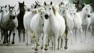 Wild Mustangs-You Can