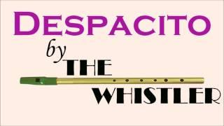 Despacito - The Whistler (Solo Instrumental Cover)