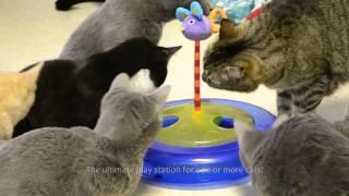 Petstages Cheese Chase Интерактивная игрушка для кошек
