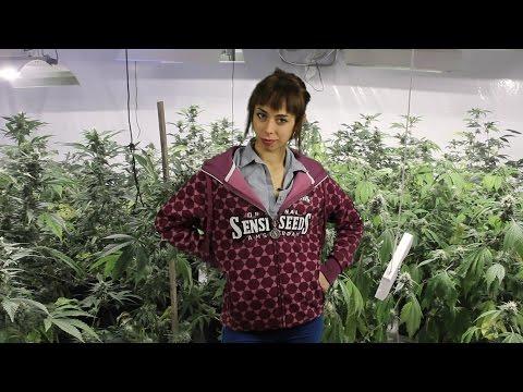 "Marihuana Television News #44 - Especial GIRA LATINA ""Cultivos"", Argentina, Chile y Uruguay"
