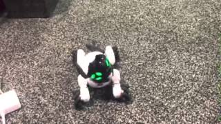 WowWee CHiP Robot Dog at CES 2016