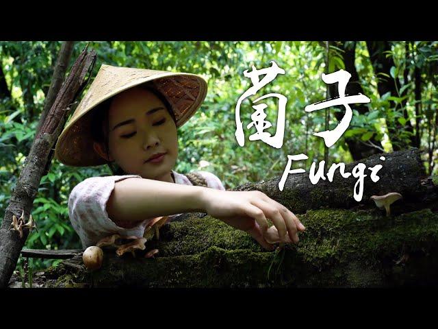 几年来,在同样七月的云南采着不同的菌子【滇西小哥】