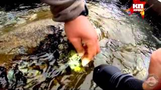 Дополнительный фото и видео материалы из экспедиции на Ямал(, 2014-09-25T04:58:21.000Z)