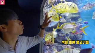 무서운 상어가족 나타났어요 ! 말이야 도망가요 ♡ 대형 상어 공격 인기동요 핑거송 영어동요 컬러송 어린이 놀이 아쿠아리움 kids shark | 말이야와아이들 MariAndKids