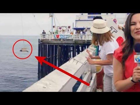 Awalnya Senang Bisa Melepaskan Anjing Laut ke Laut Bebas, tapi peristiwa aneh selanjutnya....