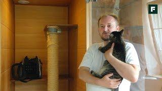 Гостиница для кошек в загородном доме // FORUMHOUSE