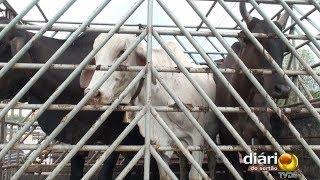 Comandante da PM fala sobre ocorrências de matança de animais em Cajazeiras