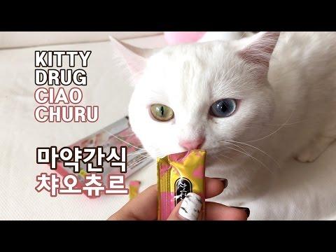 마약간식 챠오츄르 먹는 고양이 꼬부기 CAT TAKES DRUG - CIAO CHURU