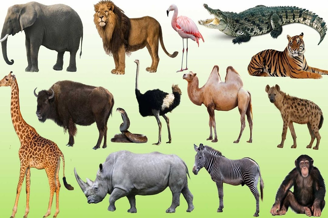 Learning Animals Sounds And Names For Children Kids And ...