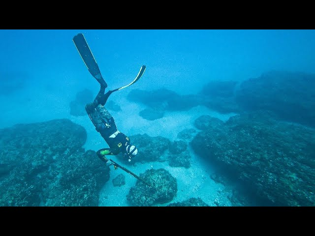 Found Two Rare Fish Under Rocks |Spearfishing Life 🇬🇷