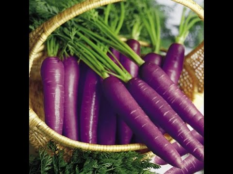 Purple Carrots for Can...