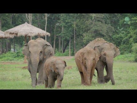 Elephant Nature Park scenery in 4k