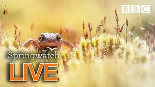 Cute wildlife cams 10 June   | BBC Springwatch