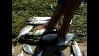 Jour De Pêche A Djerba
