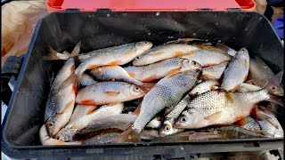 О Такой Лунке Можно Только Мечтать! Рыбалка На Мормышку Зимой 2021! (Плотва, Чебак) - ЧАСТЬ 1!!!!!