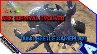 ARK Survival Evolved | How to tame a Dung Beetle | Dung Beetle Gameplay | ARK PATCH 232