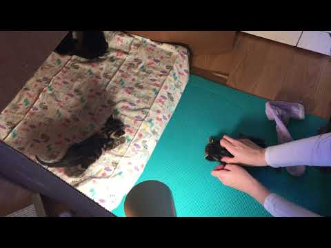 Yoga Mat to Help Kitten with Physical Issues