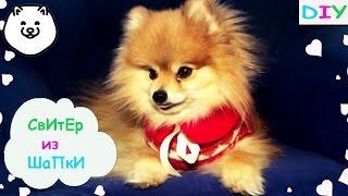 DIY DOG\СВИТЕР ДЛЯ ЩЕНКА\Одежда для собаки своими руками(Как сделать свитер для собаки из обычной Шапки.Очень легко и просто.Помимо шапки нам понадобится лишь иголк..., 2016-02-12T18:08:50.000Z)