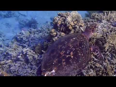 Aqaba Japanese-Gardens Snorkeling Jordan