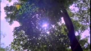 Shaleena Soundaryame - Arante Mulla Kochu Mulla (1984)