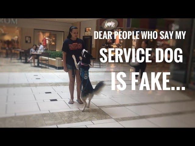 someone-told-me-to-fake-my-service-dog