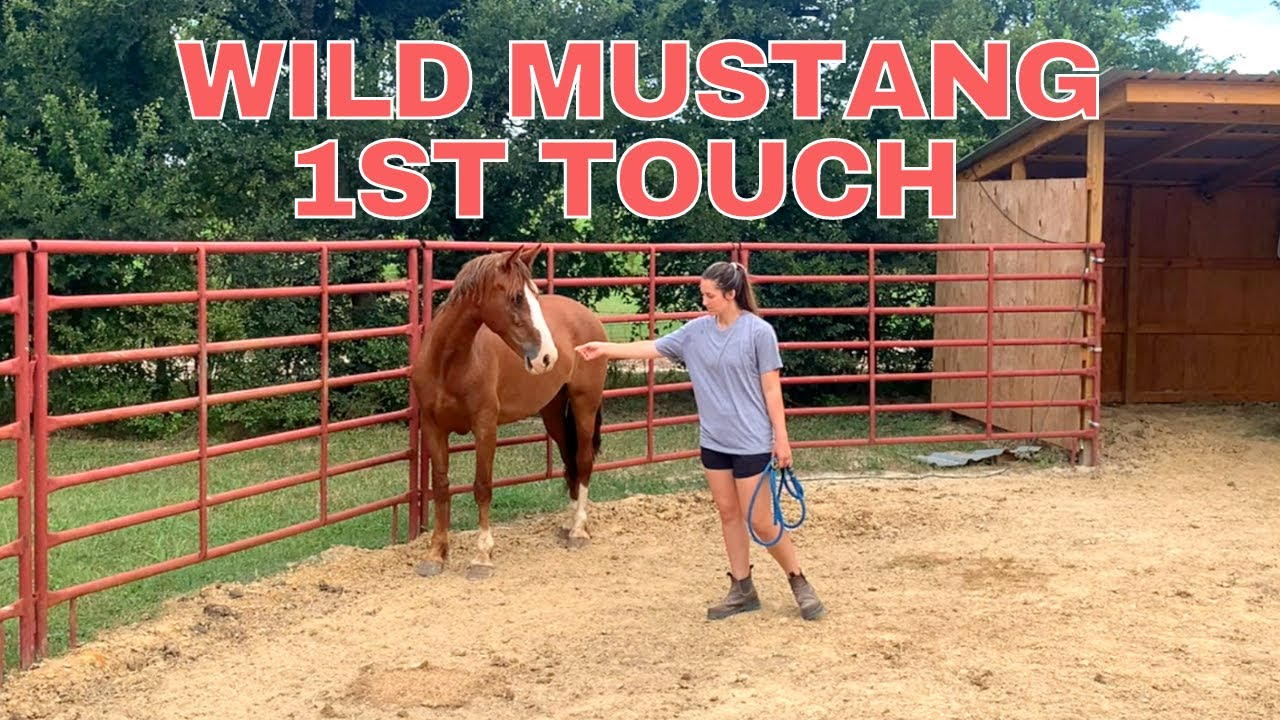 Wild Mustang 1st touch!!! 🥳