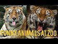 Funny animals | chetan sehgal vines | hindi dubbed | talking animals