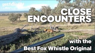 Close Encounters with the Best Fox Whistle Original...