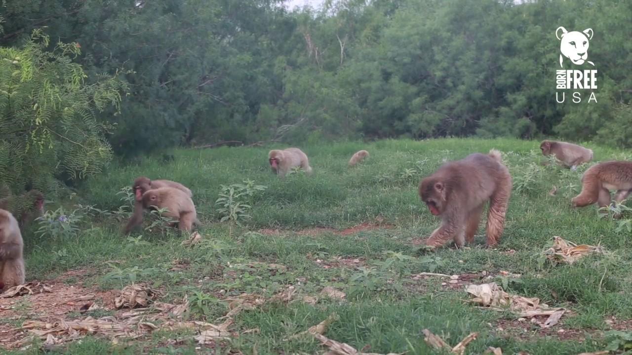 Inside the Born Free USA Primate Sanctuary Main Enclosure
