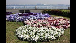 Изысканность и очарование японских цветников