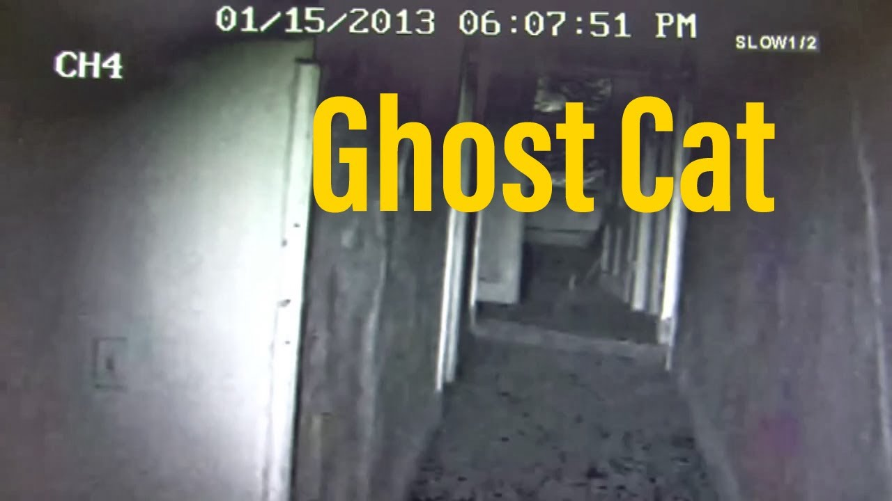 Shanley Hotel Ghost Cat