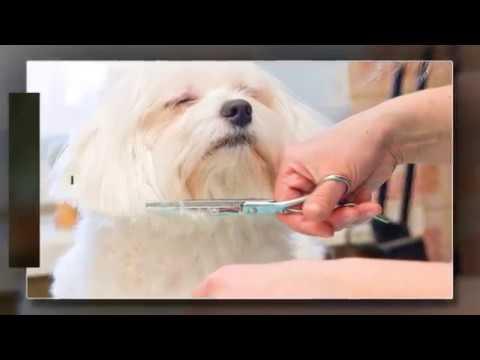 China Grove Veterinary Clinic - China Grove, TX
