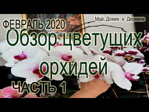 ОБЗОР ЦВЕТУЩИХ ОРХИДЕЙ ФЕВРАЛЬ 2020 ! Часть 1 .
