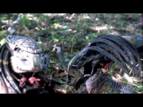 Berserker predator vs predalien