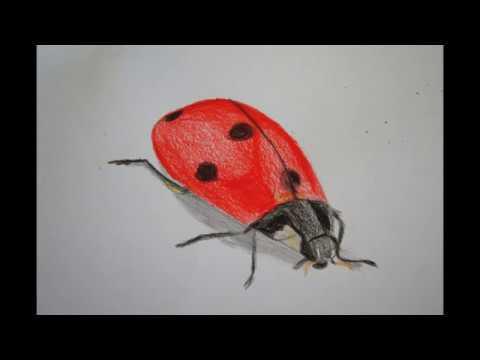 Marienkäfer Malen How To Draw A Ladybug рисунок божьей коровки